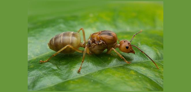 أعراض قرصة النمل وعلاجها الطبي