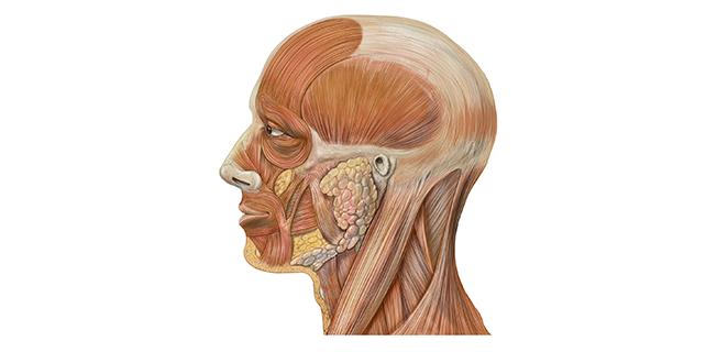 متلازمة المفصل الصدغي الفكي