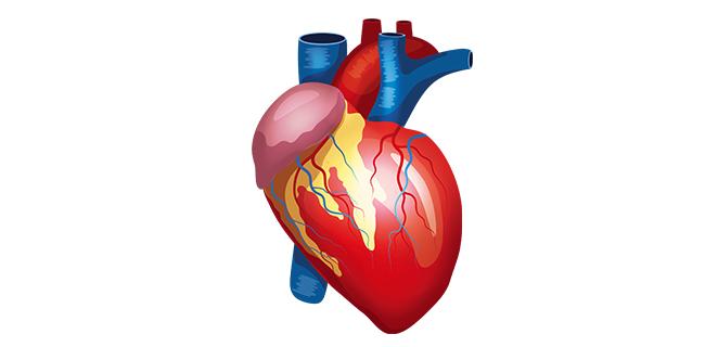 قصور عضلة القلب