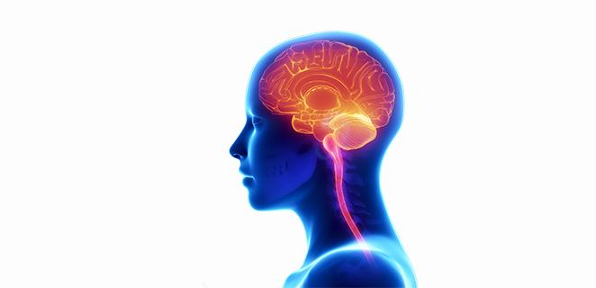 التهاب الدماغ الهربسي
