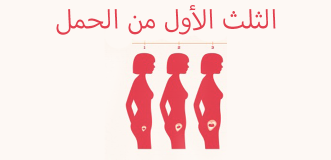 الثلث الأول من الحمل