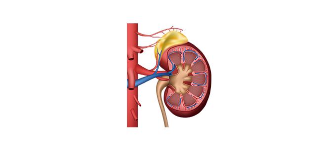 التهاب الكلية الخلالي