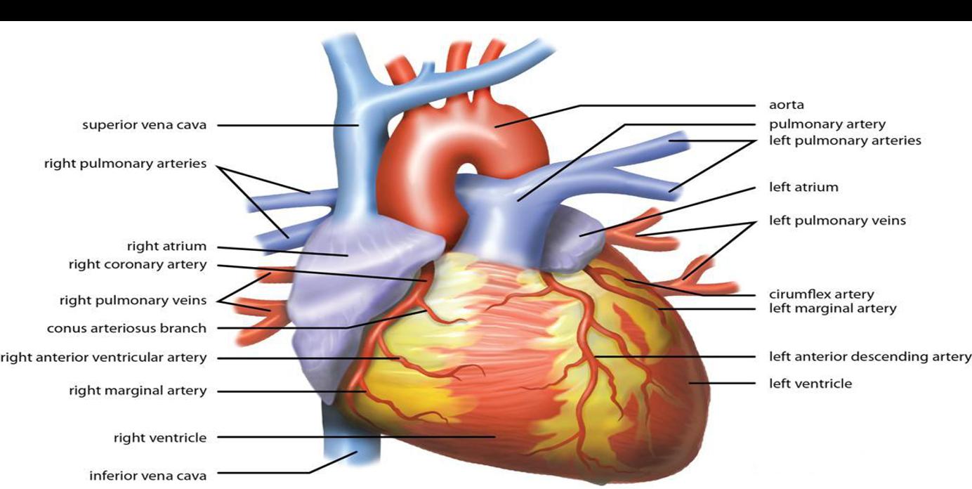 خفقان القلب