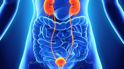 UTI  الانتان البولي والمضادات الحيوية