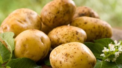 ما لا تعلمه عن البطاطس!