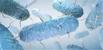 خطورة أنتشار سلالات بكتيريا القولون القاتلة