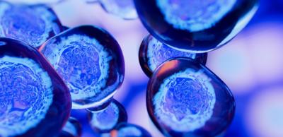 زراعة الخلايا الجذعية المكونة للدم