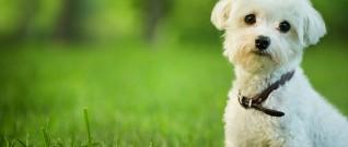11 عدوى يمكن التقاطها من الحيوانات الأليفة