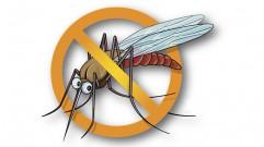 انتشار فيروس زيكا الحالي خطر يهدد العالم