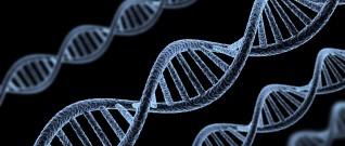 الجينات البشرية وفائدتها في علاج الأمراض الوراثية