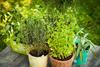 الأعشاب الطبية لزيادة الوزن