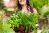 علاج التهاب الحنجرة بالأعشاب