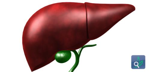 تطوير مضخة تُخفف أعراض أمراض الكبد
