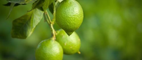 خمس فوائد صحية لليمون الاخضر