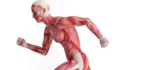 أغذية للمحافظة على قوة وكثافة العضلات