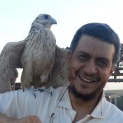 الدكتور عماد يس سعد الدين