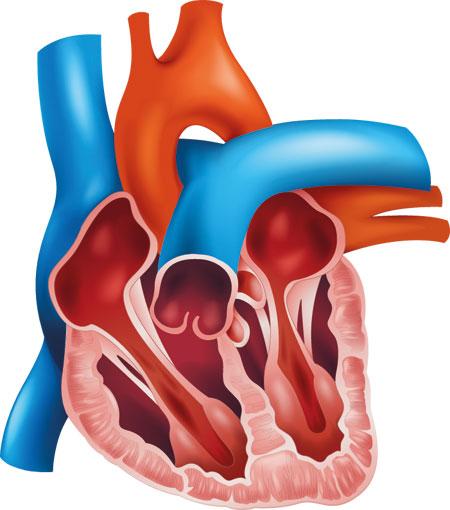 منظمة الغذاء والدواء توافق على مضخة لمرضى القلب