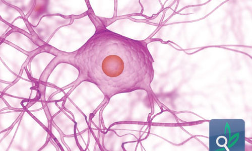 الكشف عن نوع جديد من الخلايا العصبية في الدماغ