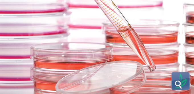 تحديد جسم مضاد يحسن علاج السرطان