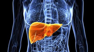الفرق بين تشمع الكبد دهون الكبد (تشحم )