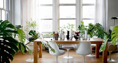 نصائح للوقاية من الحساسية عند اقتناء النباتات المنزلية