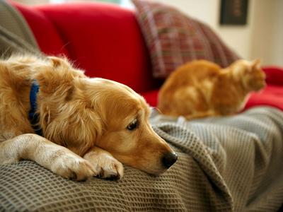 نصائح للوقاية من الحساسية عند اقتناء الحيوانات الأليفة