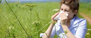 التهاب الأنف التحسسي وسلامة حاسة الشم