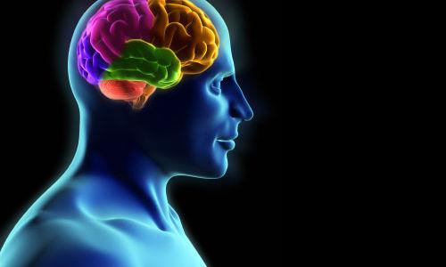 استمرار تطور الدماغ بعد مرحلة المراهقة