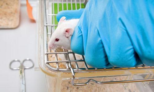استئصال دهون البطن جراحيا يقلل من سرطان الجلد لدى الفئران
