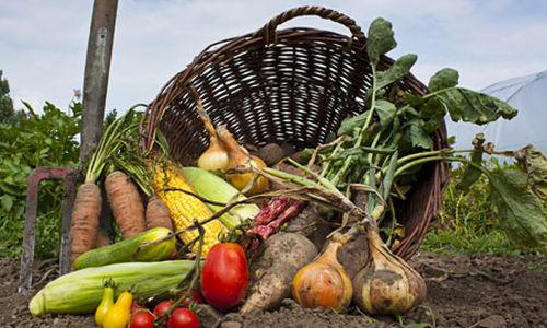 الغذاء العضوي ليس أفضل صحيا من الغير عضوي