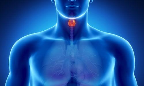 اضطرابات الغدة الدرقية  تؤثر على القلب