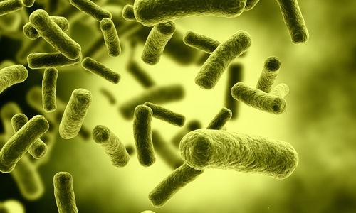 انتشار بكتيريا المطثية العسيرة  سهل و سريع