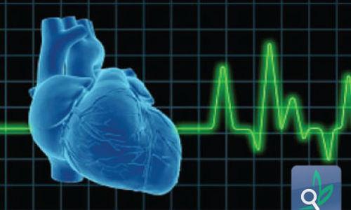 فيروس يساعد في بناء جهاز لتنظيم دقات القلب