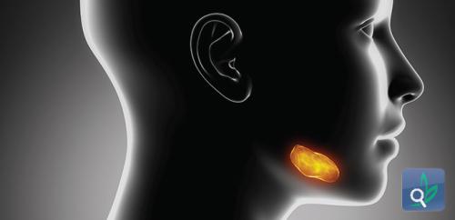 العلاج المناعي تحت اللسان فعال لعلاج الحساسية
