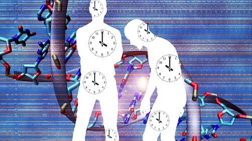 اختلال الساعة البيولوجية يضعف جهاز المناعة