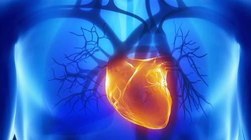 سائل الطحالب البحرية ينقذ مرضى النوبة القلبية