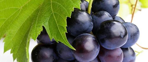 خلاصة بذور العنب فعالة في علاج سرطان القولون