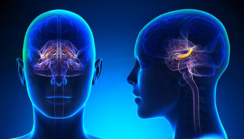 زرعات في الدماغ قد تمكّن المرضى المصابين بالشلل من استخدام الأجهزة اللوحية والهواتف الذكية