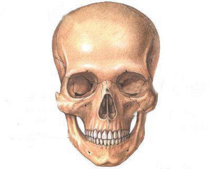 عظام الوجه