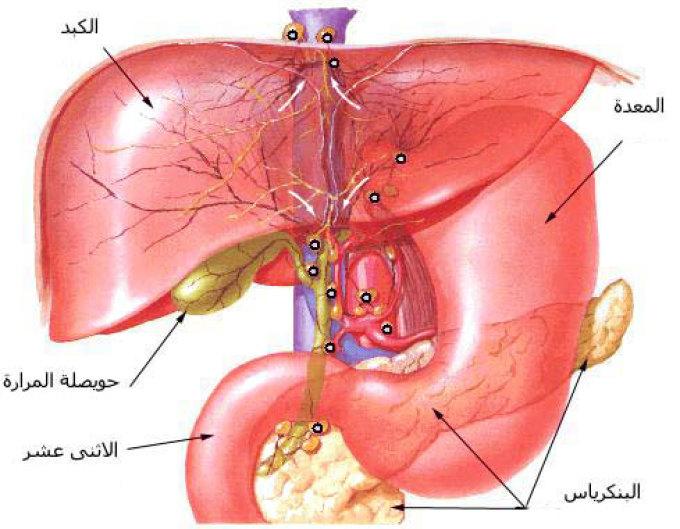 التهاب الكبد المزمن
