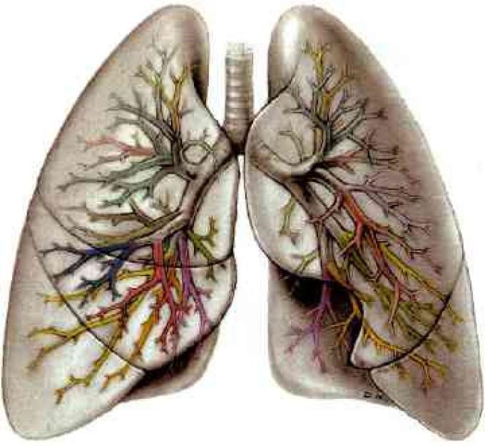 فَرْطُ ضَغْطِ الدَّمِ الرِّئَوِيّ   Pulmonary hypertension PH