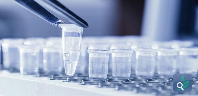 هل الخلايا الجذعية علاج جذري للسكري ؟