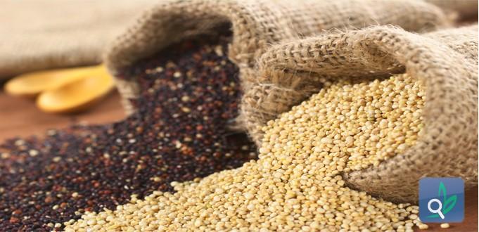 الكينوا هل ستكون بديلاً عن الأرز ؟