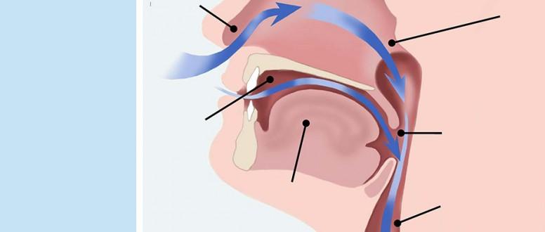 الجهاز التنفسي العلوي