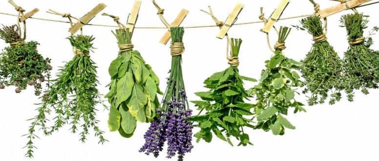 علاج انخفاض وارتفاع هرمون FSH بالتغذية والأعشاب